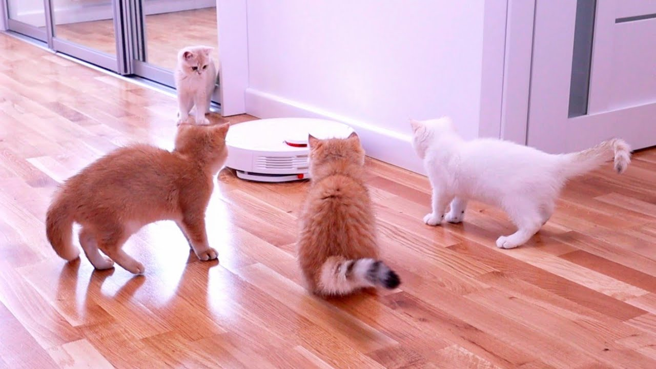 Kittens Vs Robot Vacuum Cleaner