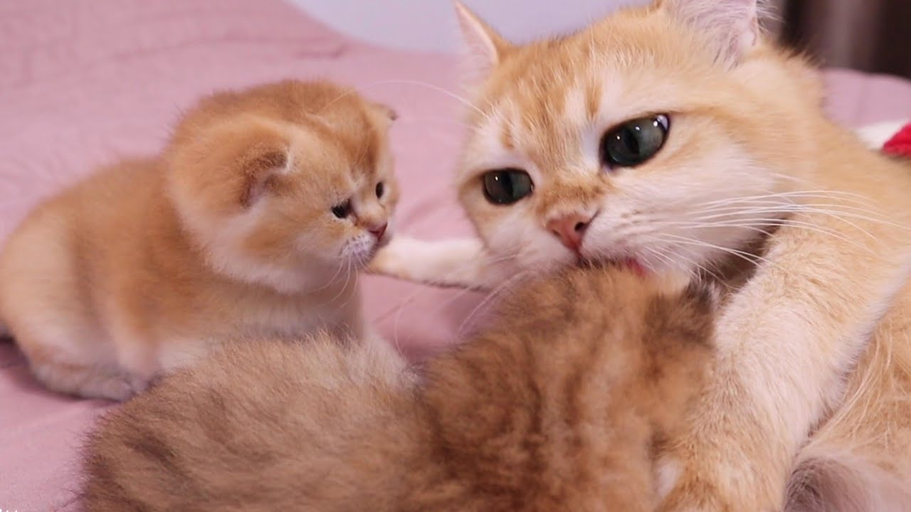 Cute Kittens With Mom