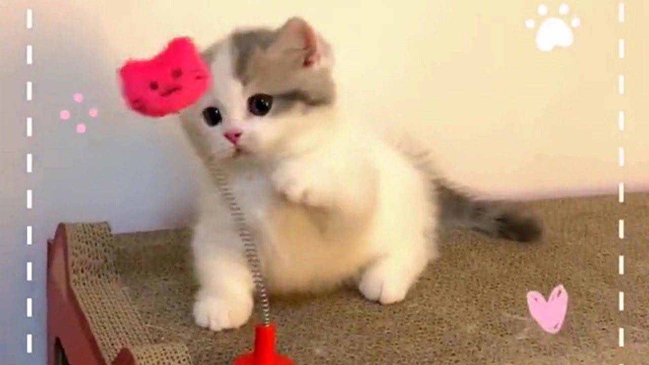 Cute Playful Kittens