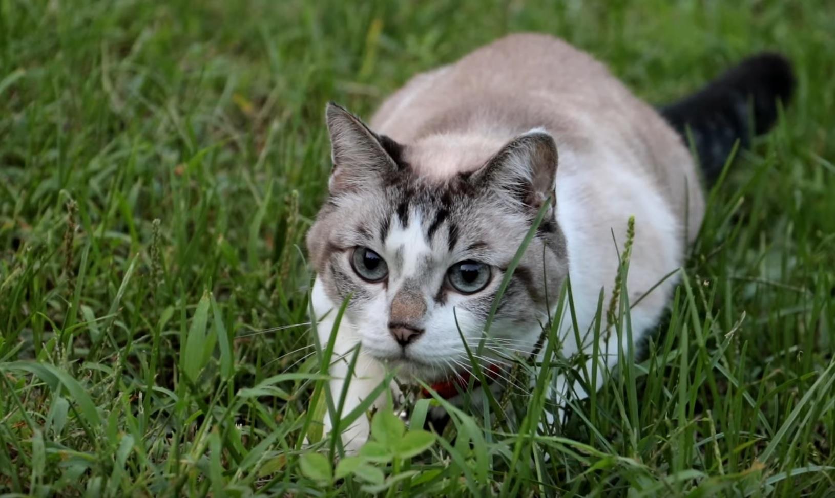 Cute Cat Outside