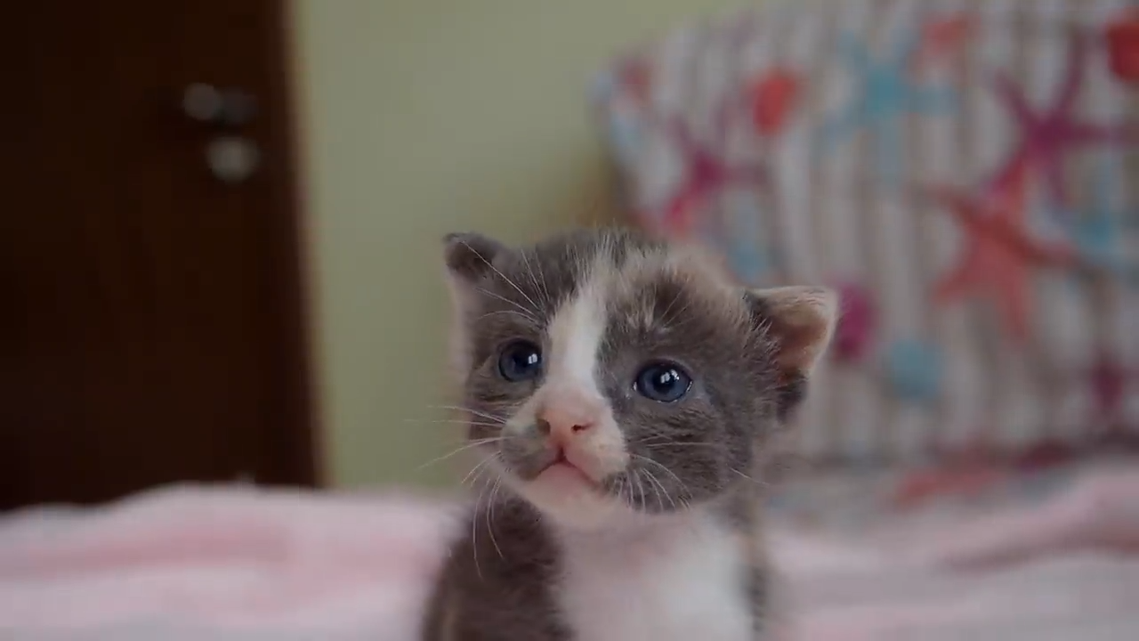 A very cute kitten