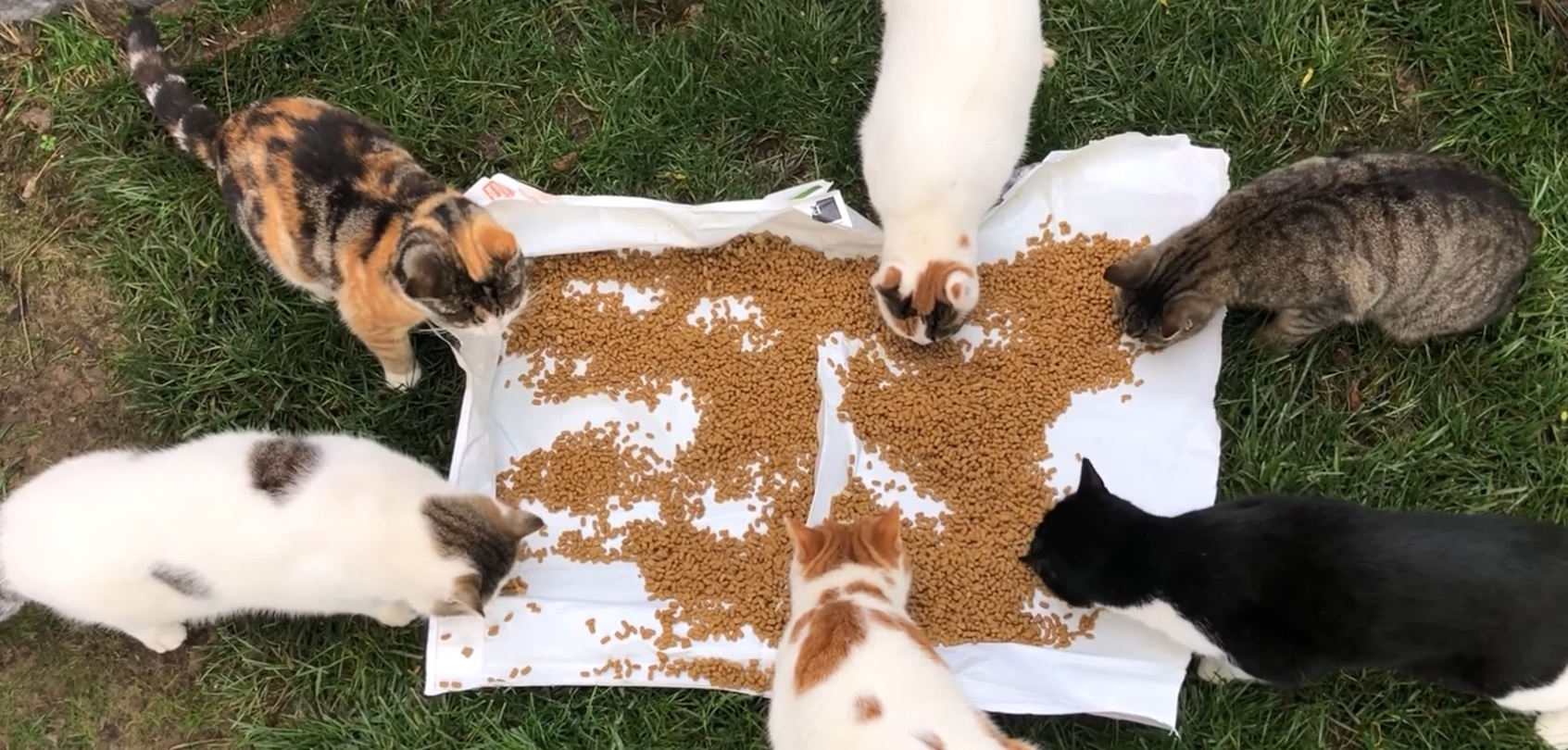 All You Can Eat Buffet For Cats