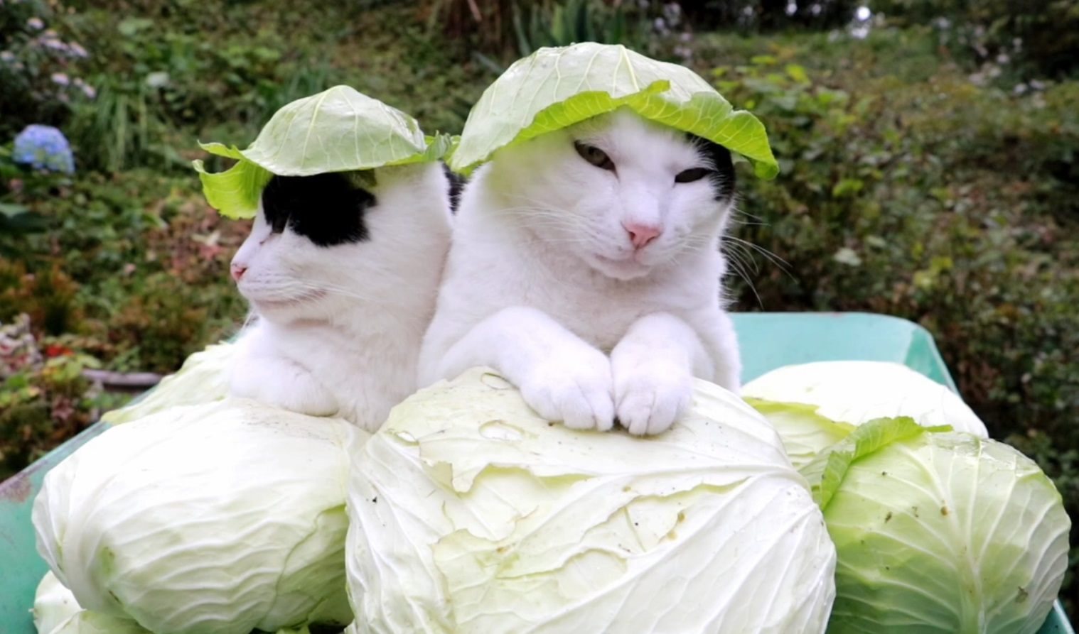 Stylish Cabbage Hats