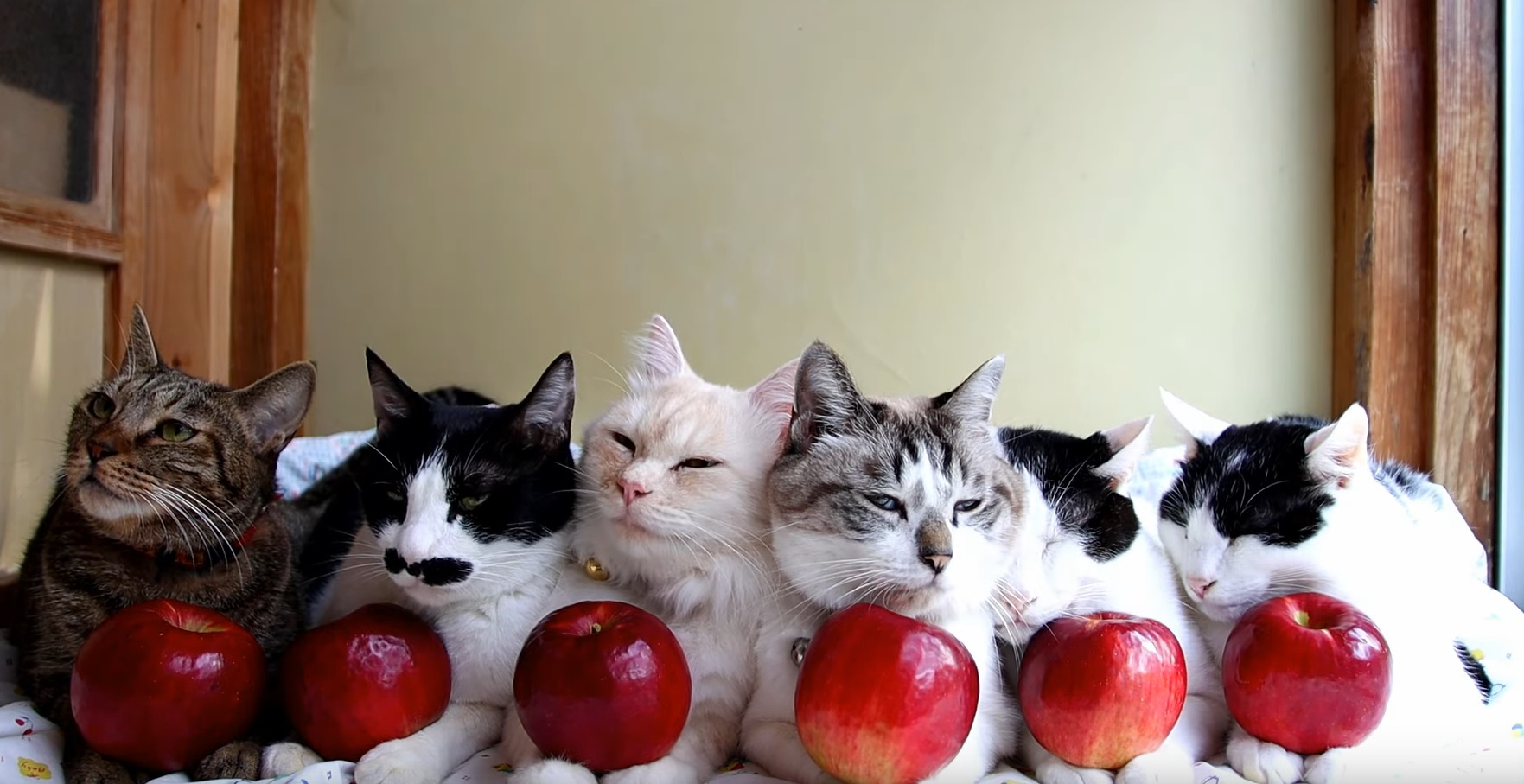 Cute Apple Kitties