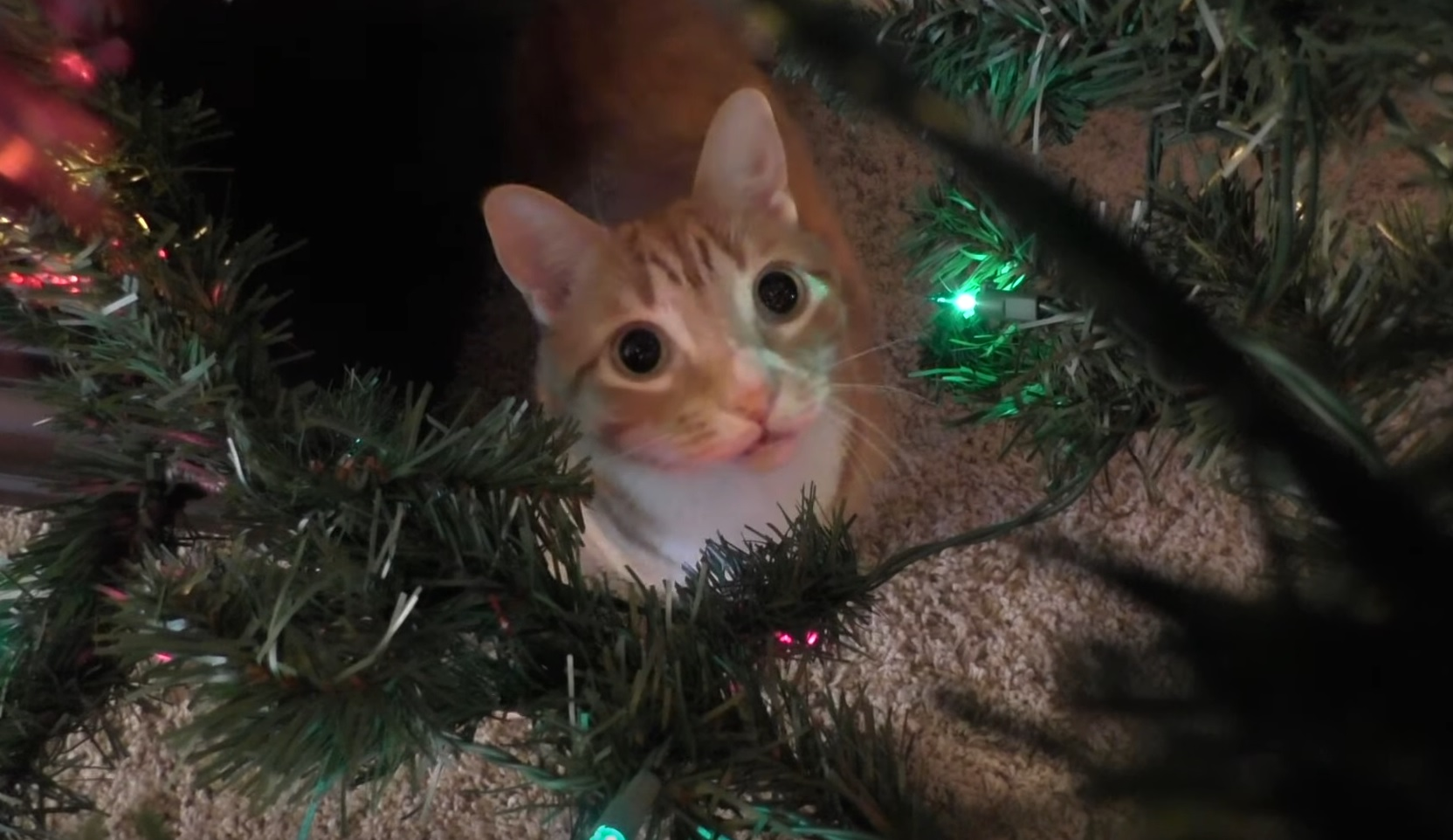 Funny Cats Vs Christmas Trees