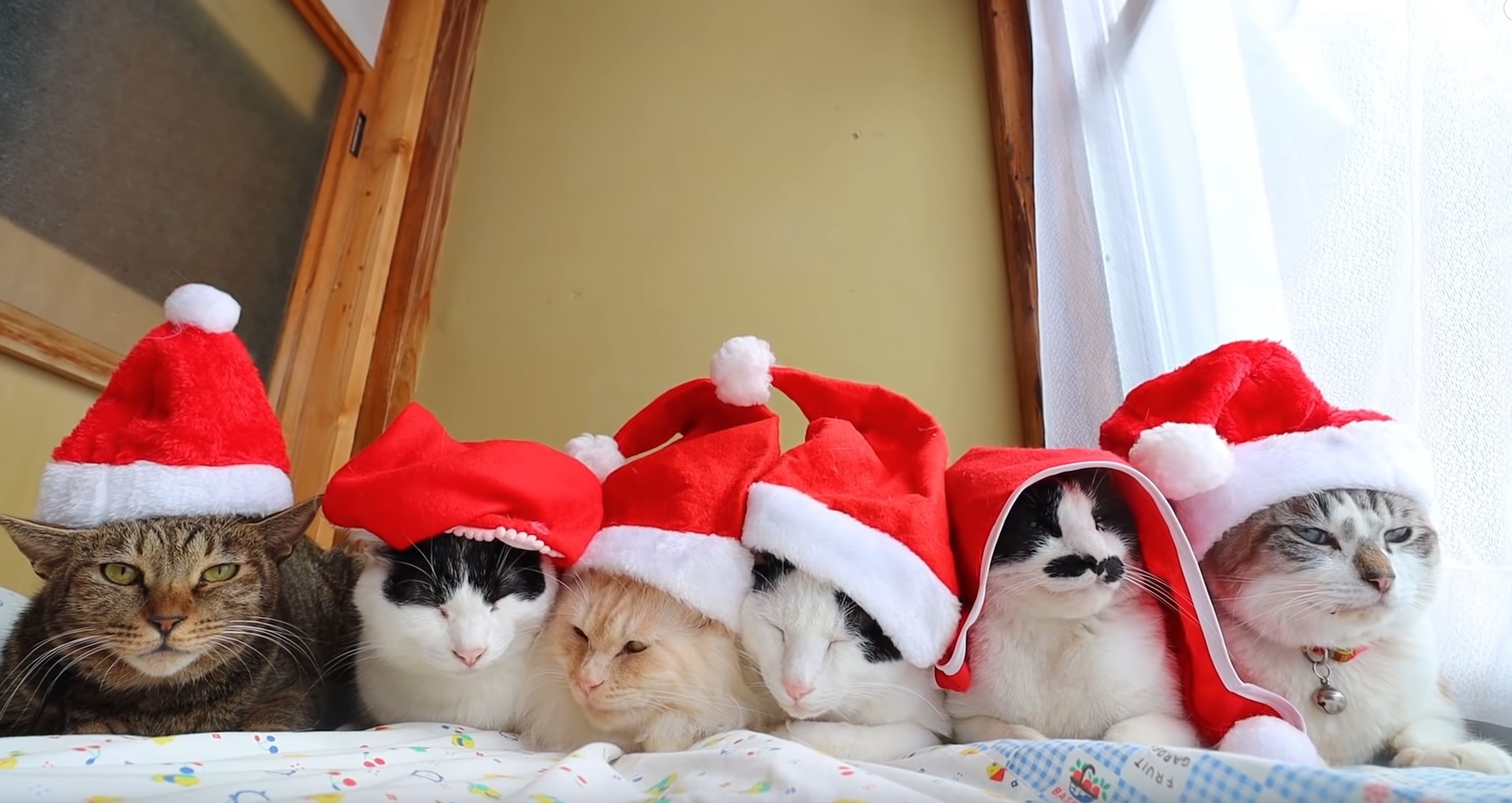 Cats Are Ready For Christmas