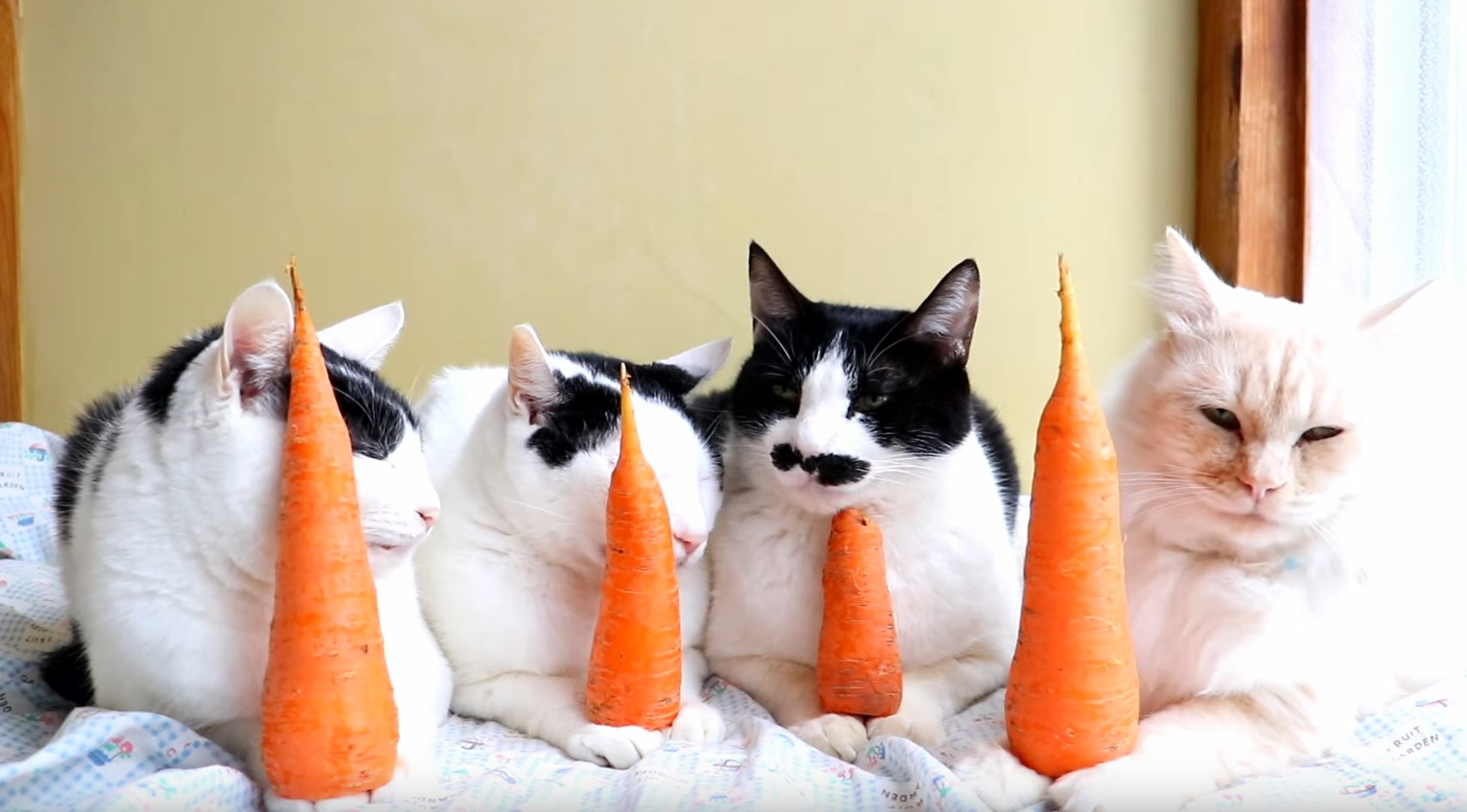The Carrot Masters