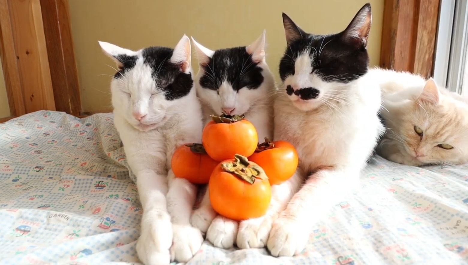 Adorable Cats Relaxing