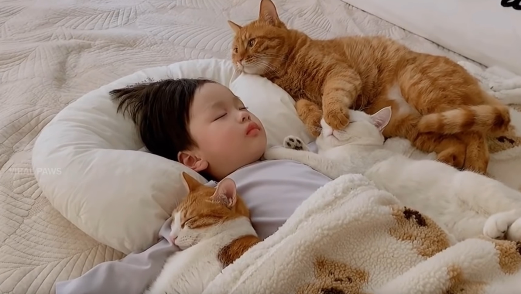 Adopted Cats Cuddle With Hooman