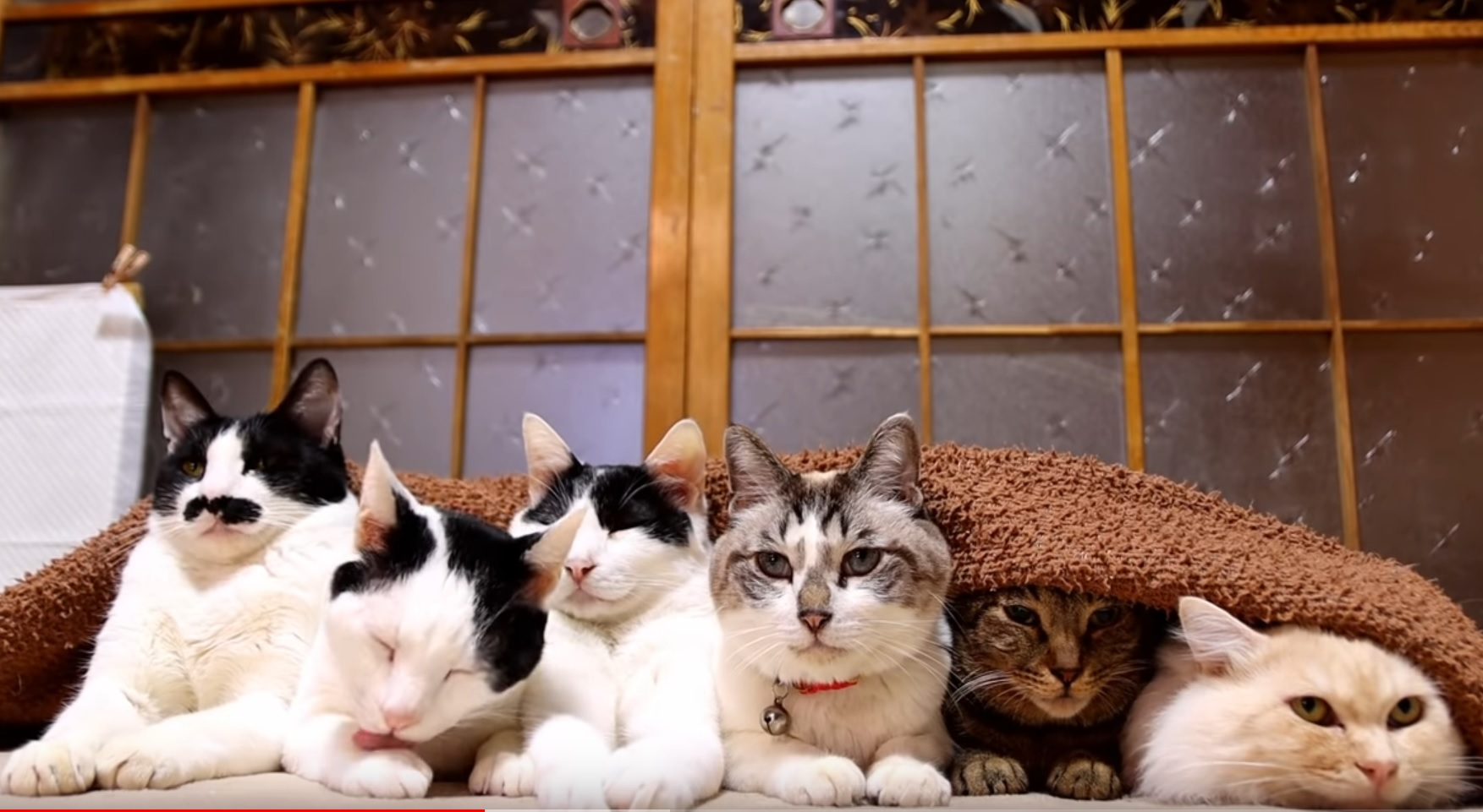 Cute Cats Staying Warm