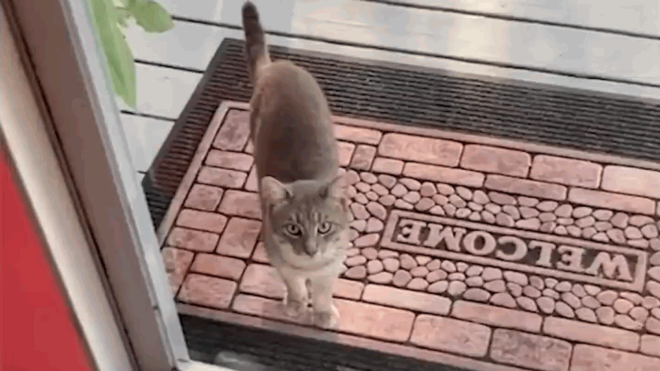 Family makes friends with a kitty that was under their porch