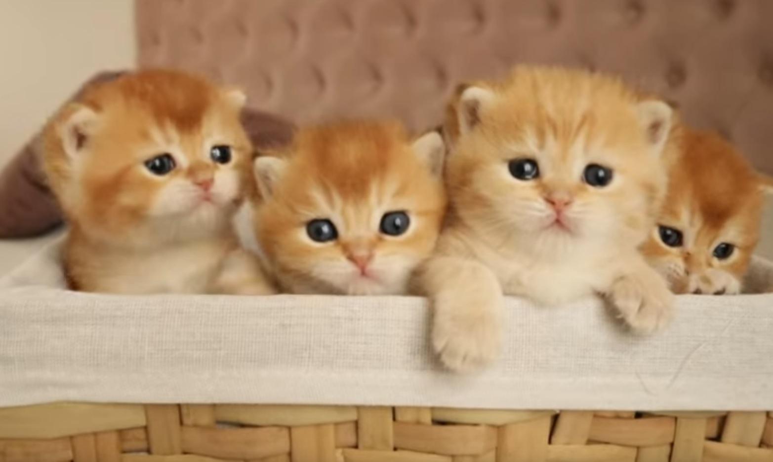 A Basket Full Of Cuteness