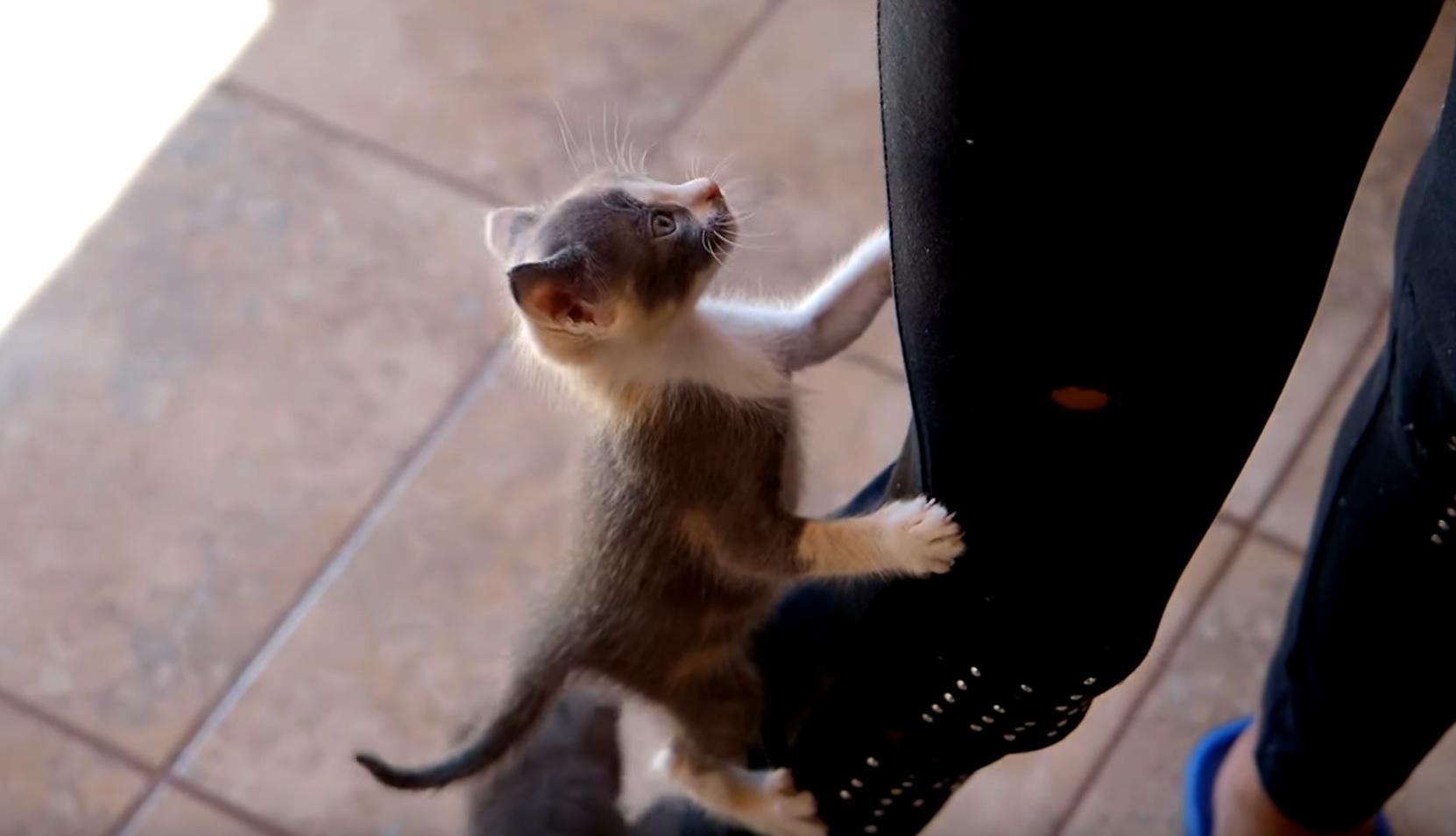 Cute Energetic Kittens