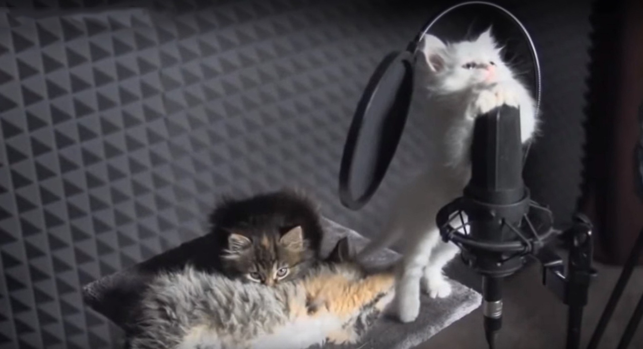 Cute kittens singing