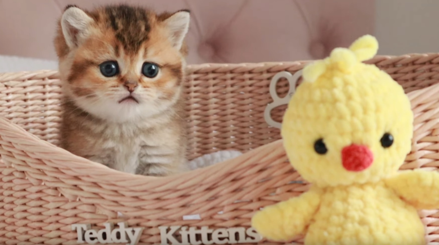 This Kitten Is Too Cute
