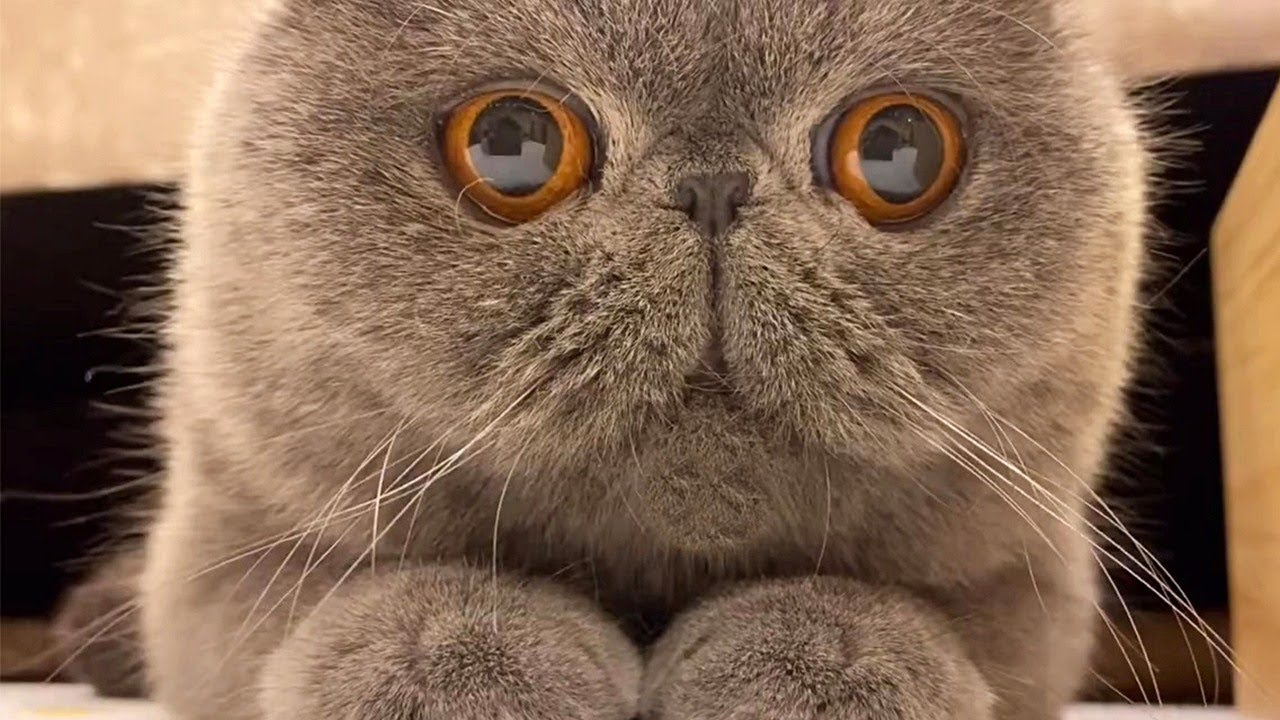 Grayfield Kitty