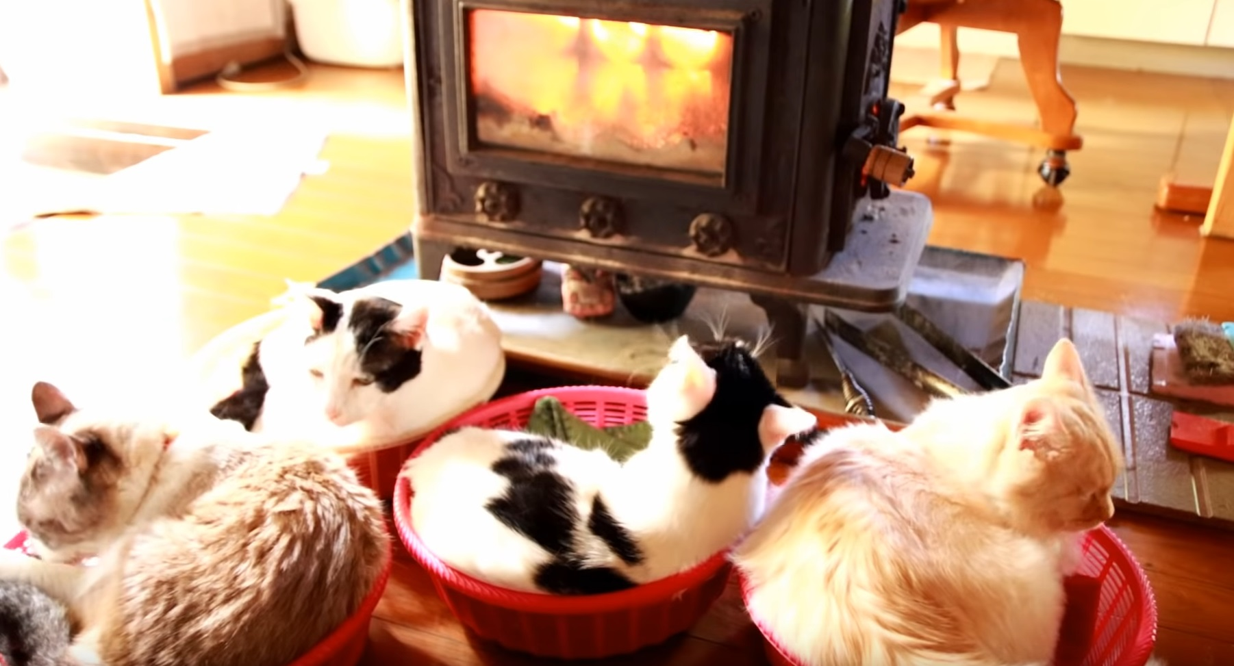 Kitties Basking By The Fire