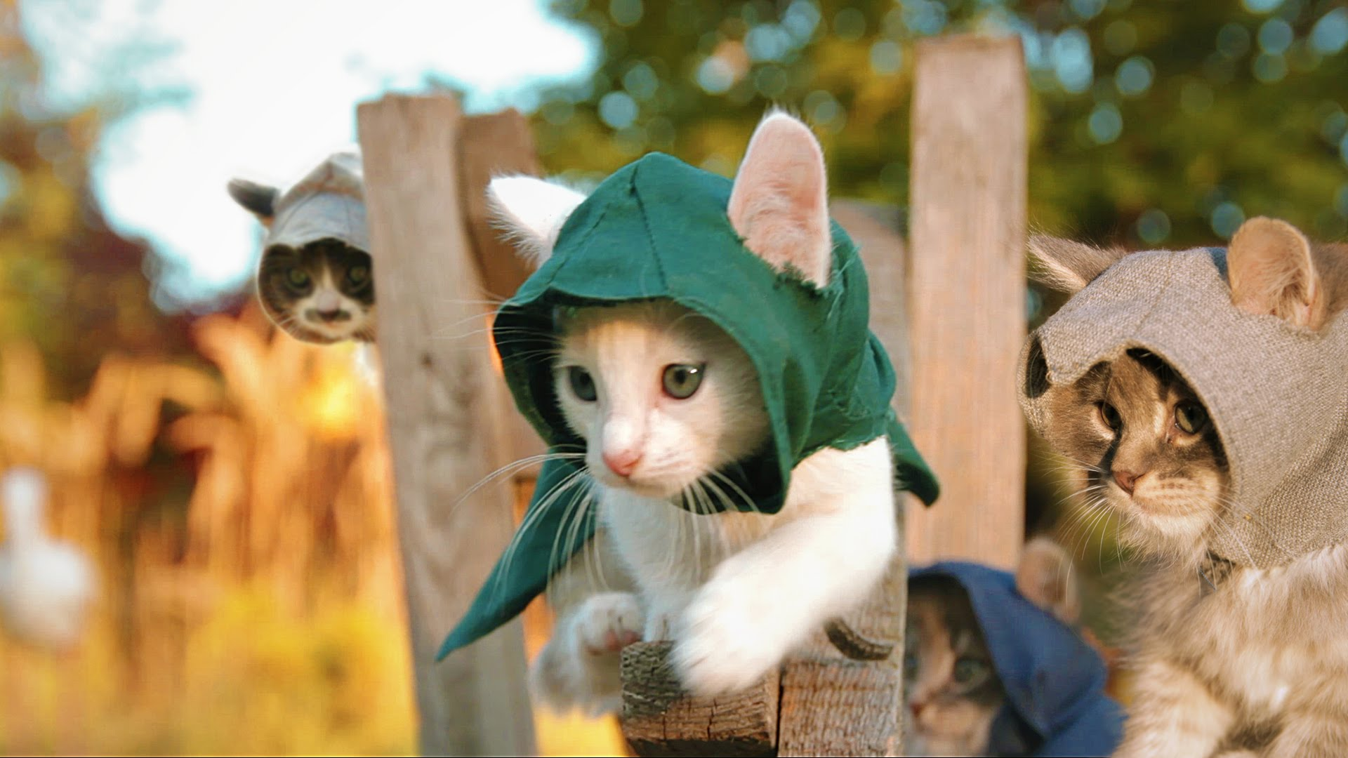 Assassin's Kittens