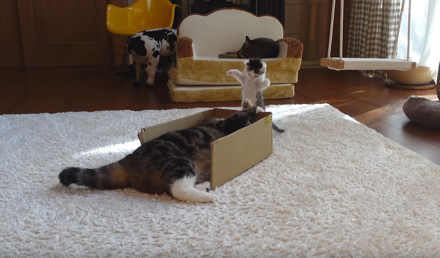 Kitten Vs Maru