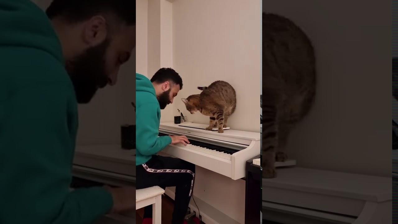 Kitty Loves Hearing The Piano