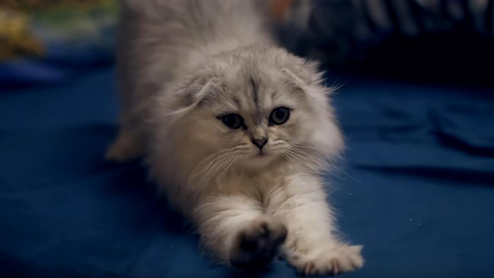 Adorable Kitten Video