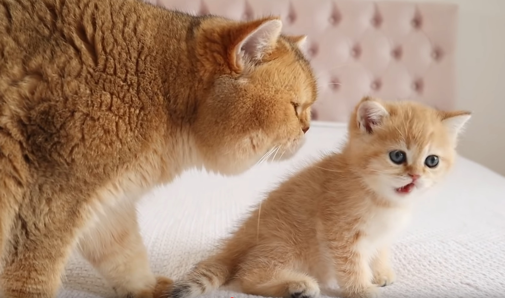 Dad Checks Out His Kitten
