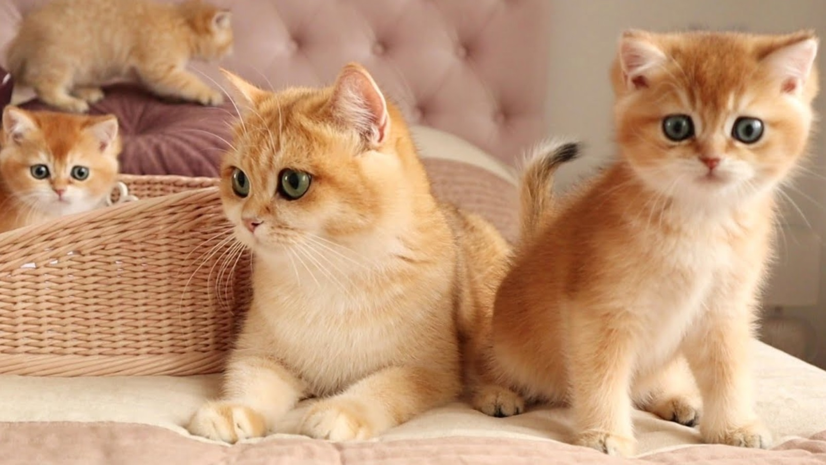 8 Minutes With These Cute Kittens