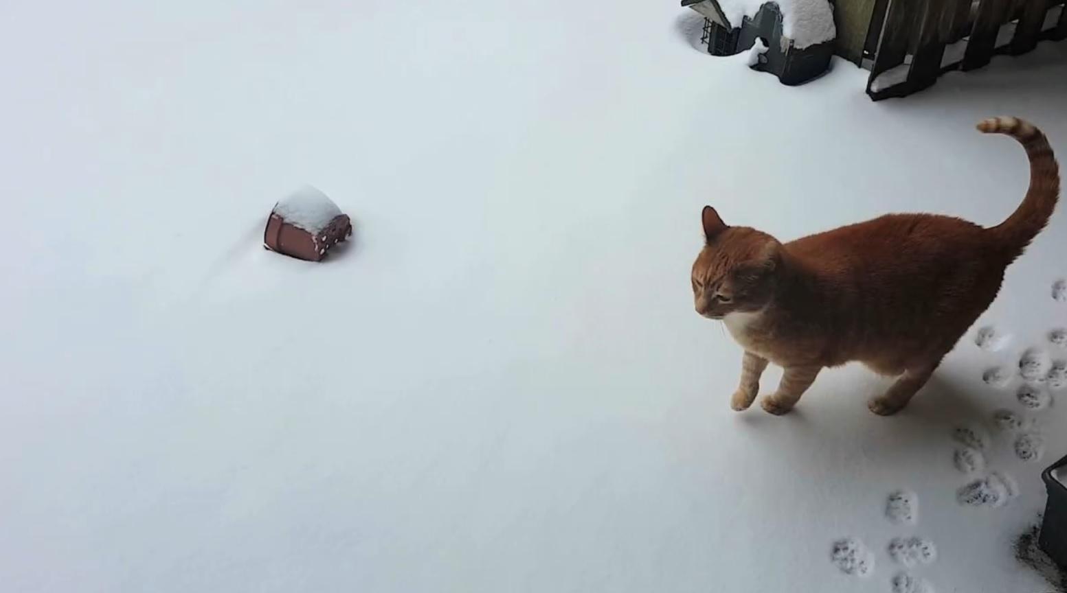 Alvi Checking Out The Snow