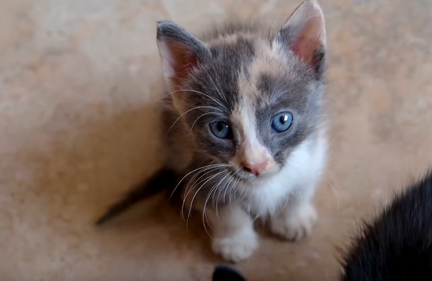 This Rescued Kitten Has Most Beautiful Eyes