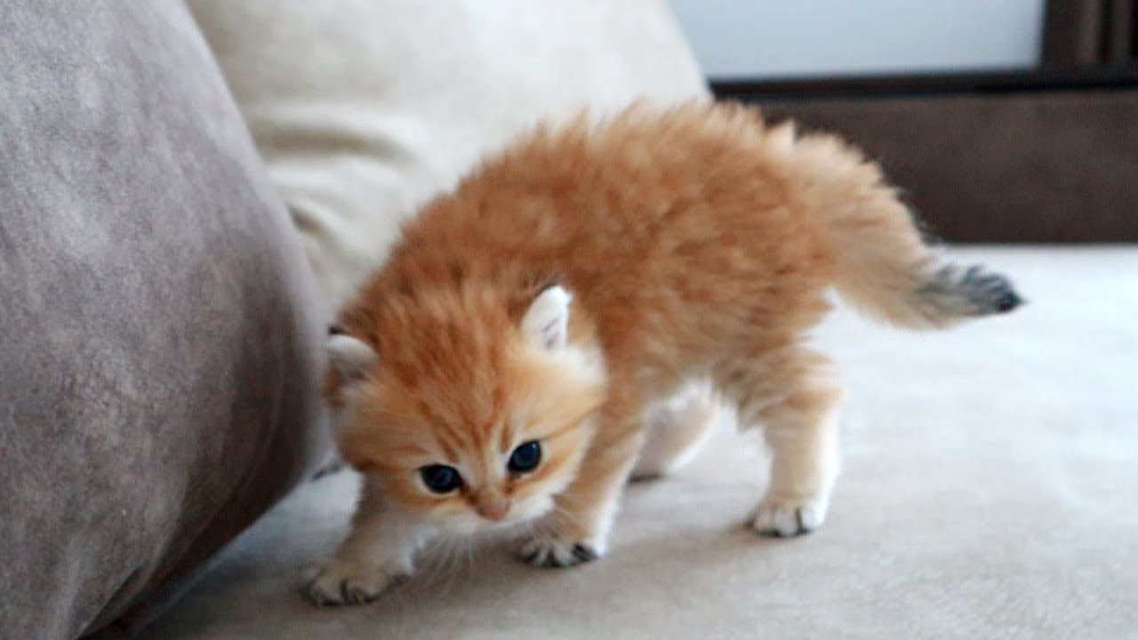 This ferocious kitten is ready to shred you!