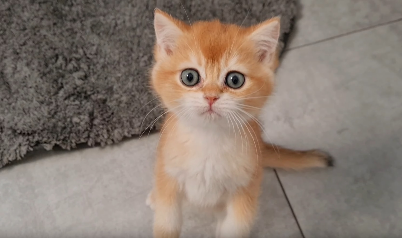 Kittens Eating ASMR
