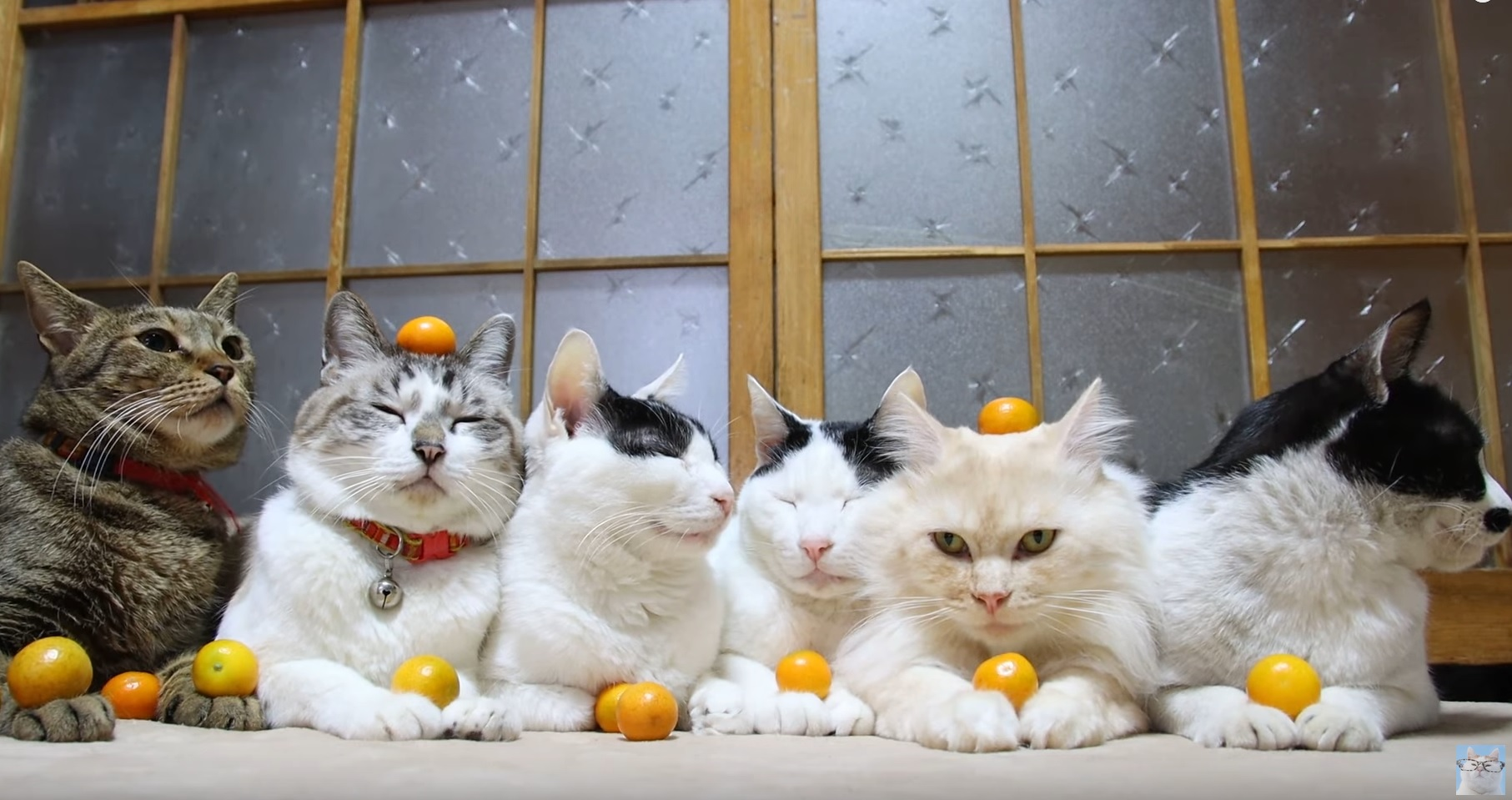 Majestic Cats Hanging Out