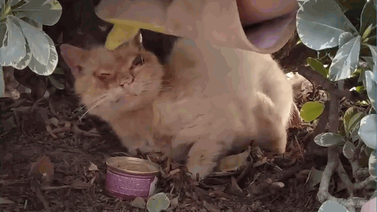 Really sick feral cat gets a chance to a better life