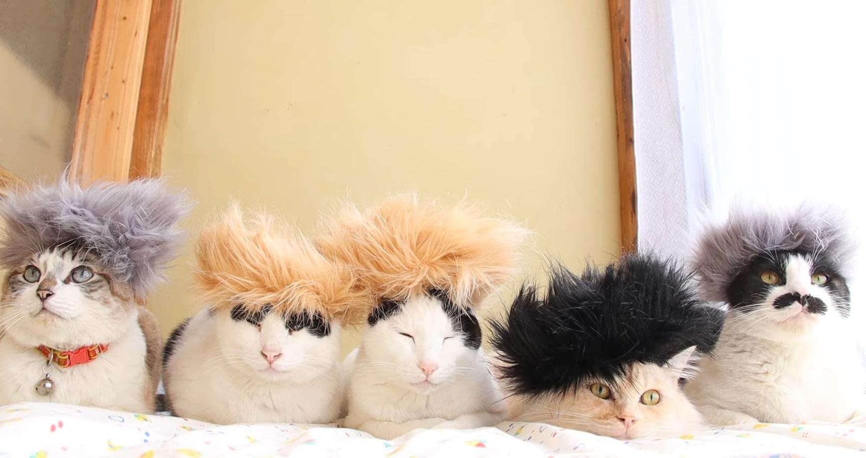 Mohawk Cats