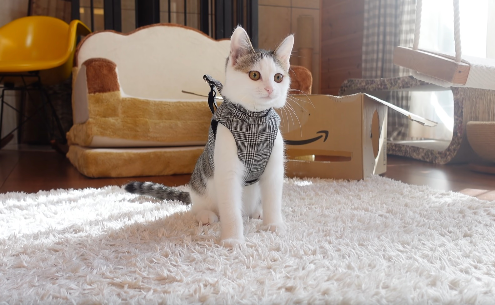 Kitten Practices Harness