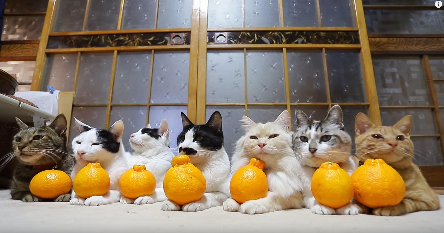 Cute Patient Cats