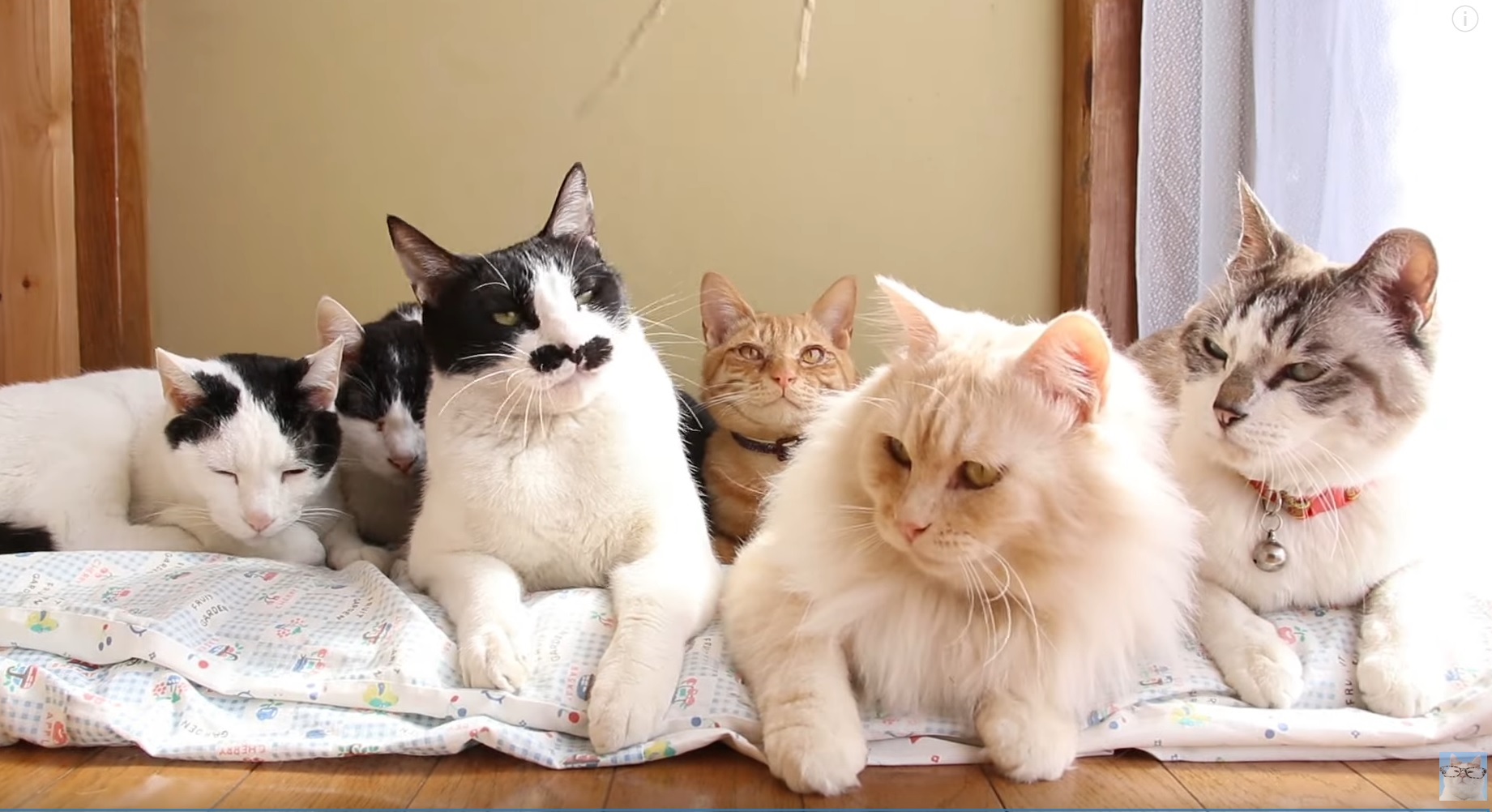 Cute Cats Chilling Out
