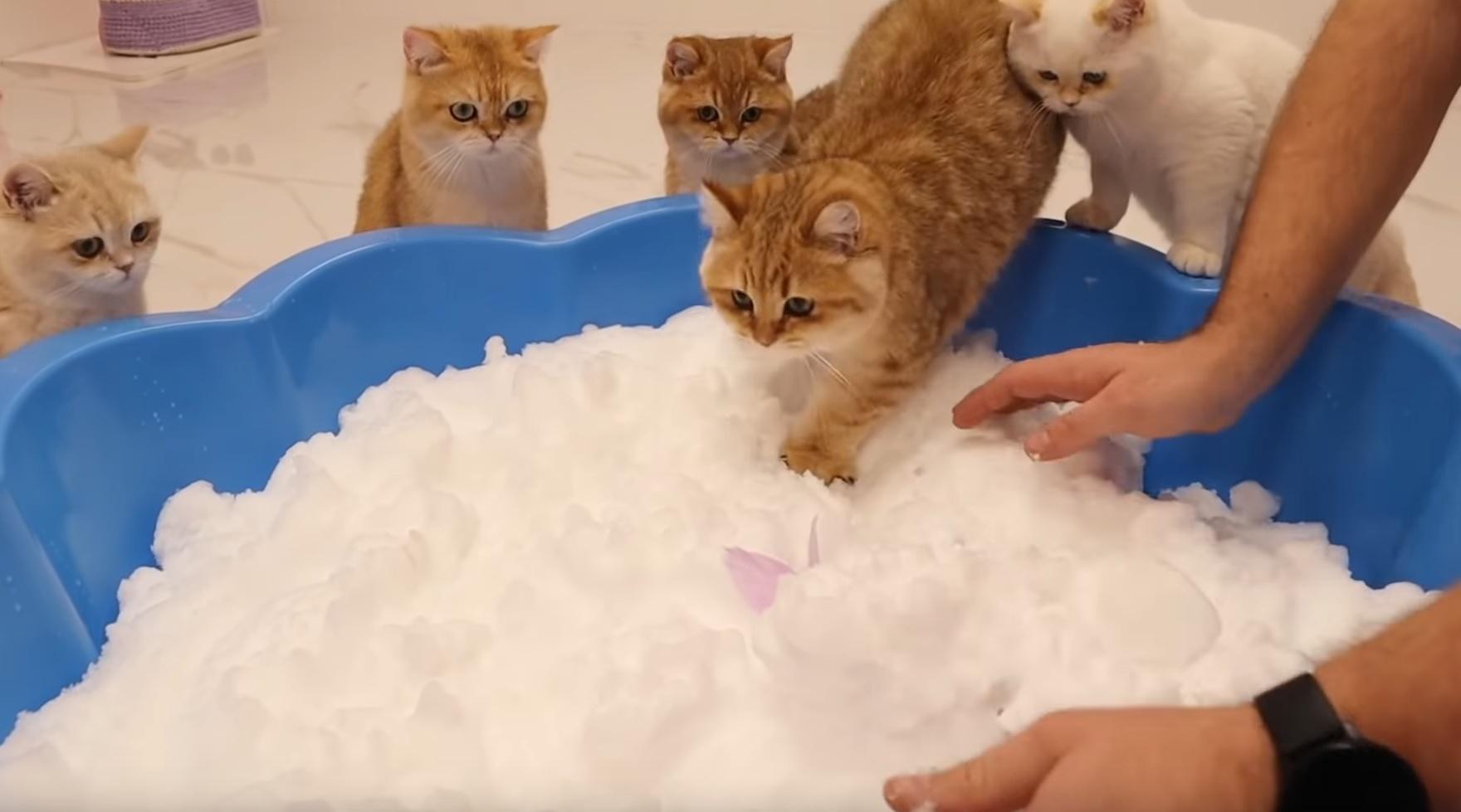 Cats Inspect Snow