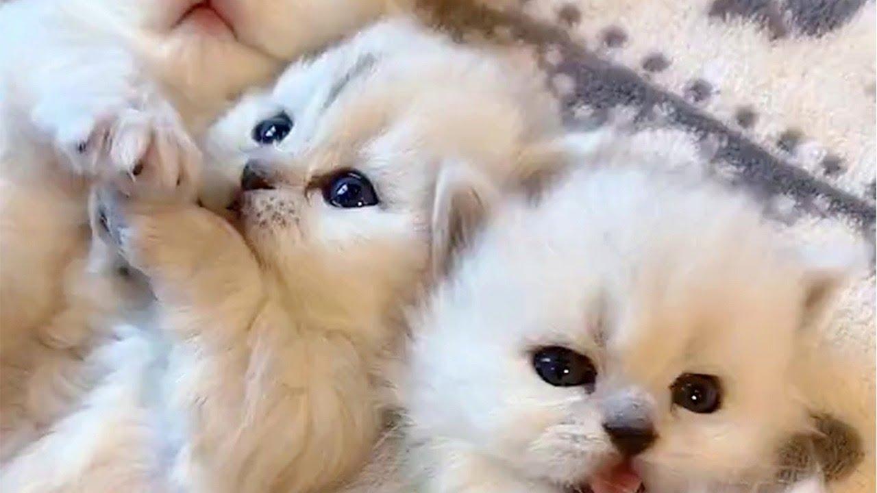 Snuggly Snowy Kitten Video