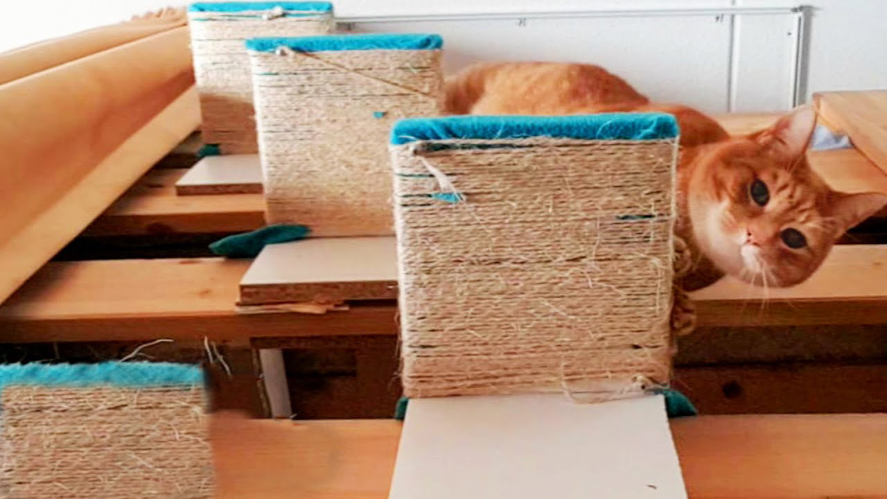 Hooman creates steps for senior ginger cat, so he can reach to cuddle with his favorite hooman.