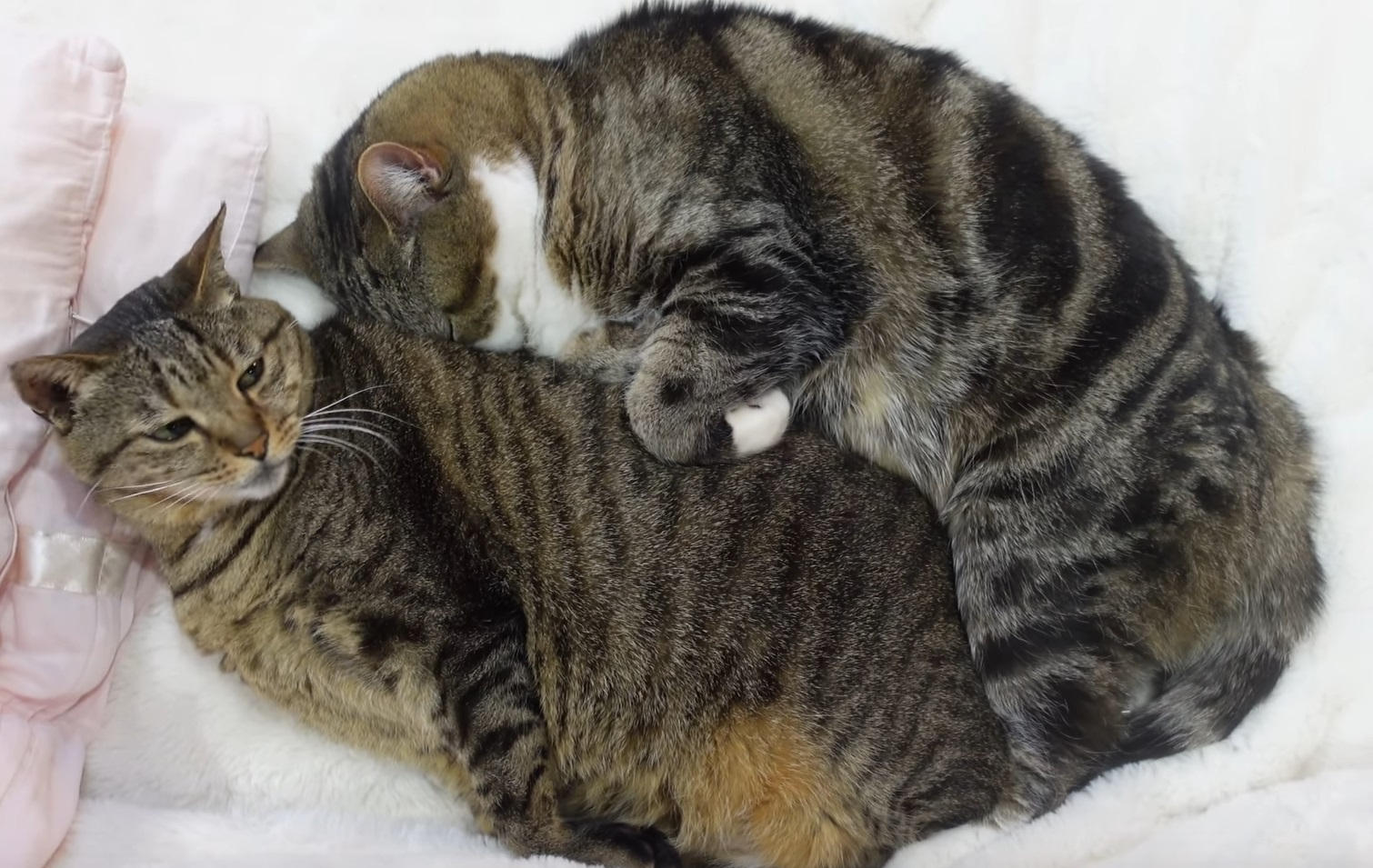 Cute Moments With Maru And Friends