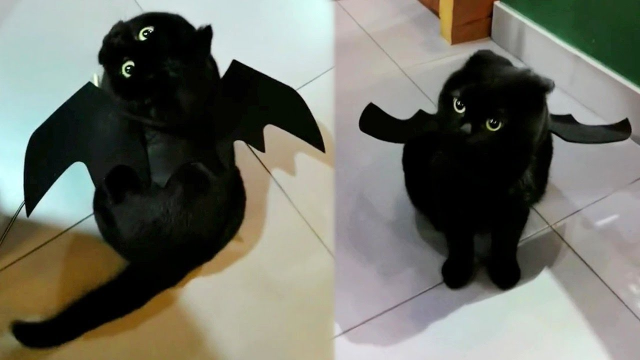 Meet The Real Life Toothless
