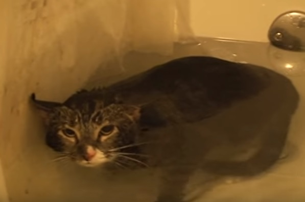 Cat Meows In The Bathtub