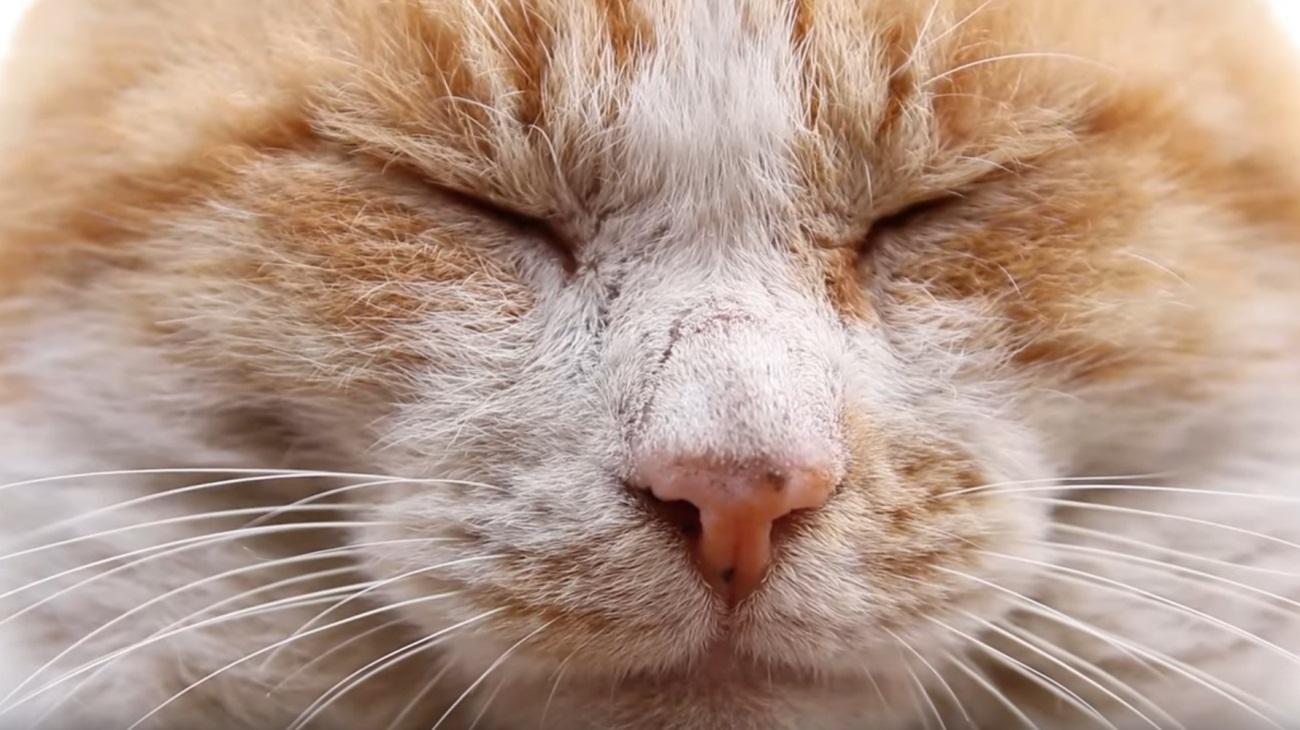 Adorable Face Closeup