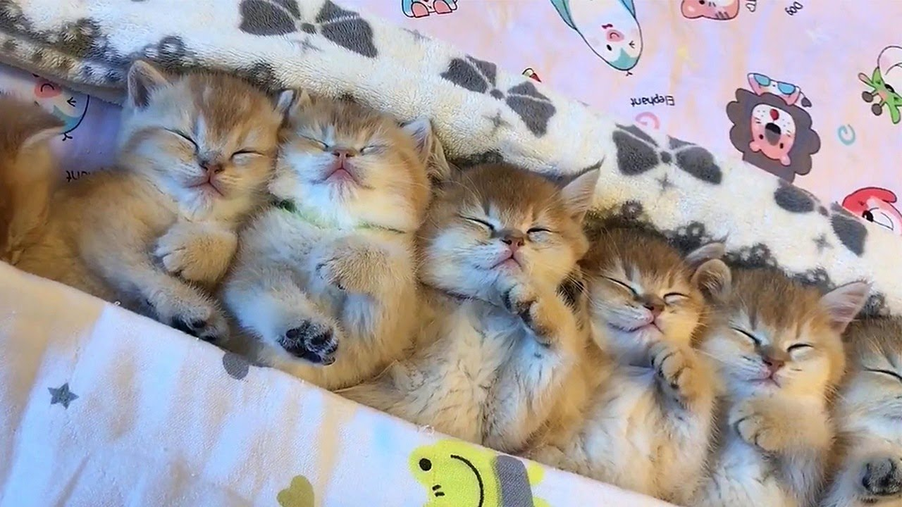 Adorable Sleepy Kittens Video
