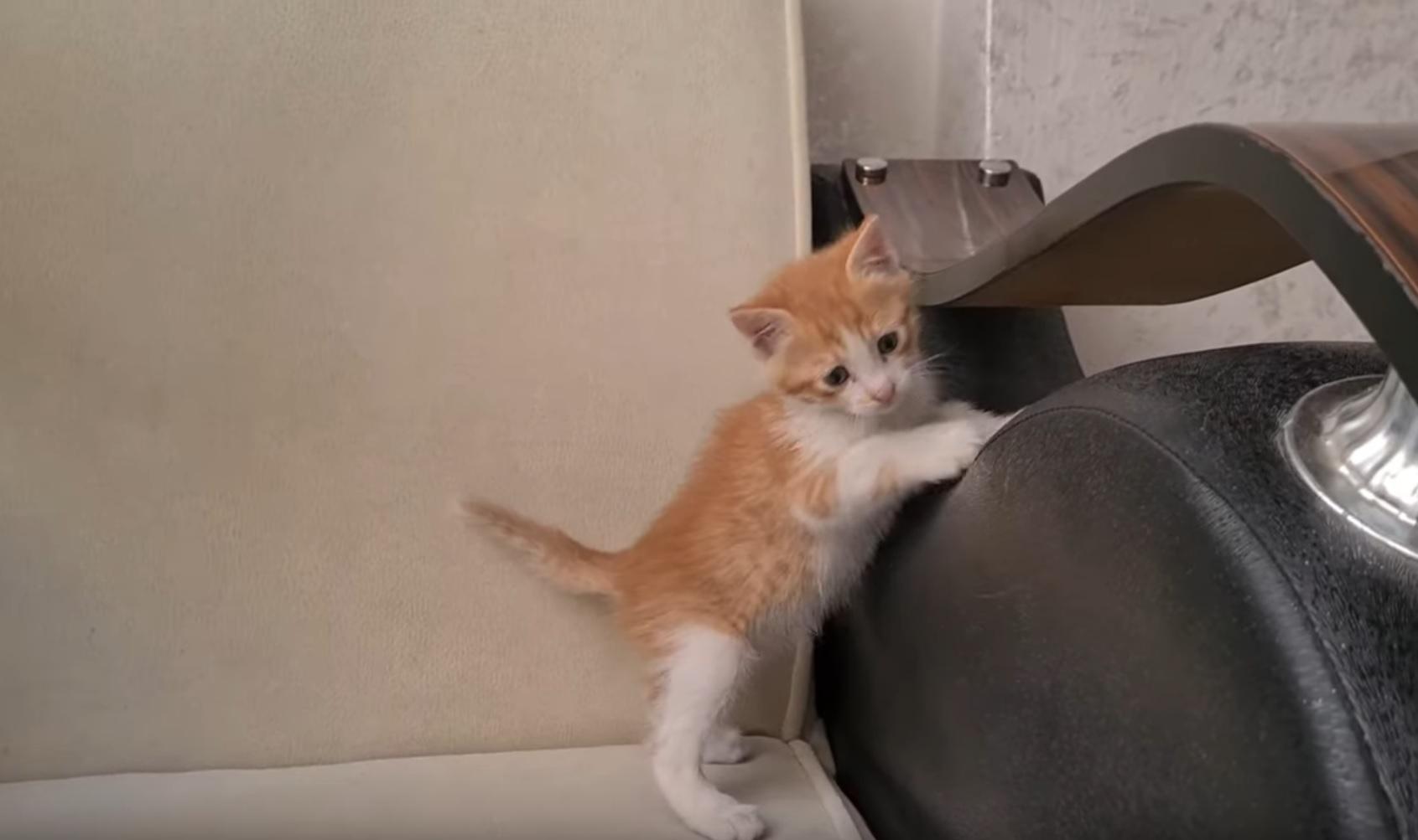 Energetic Kitten Playing Video