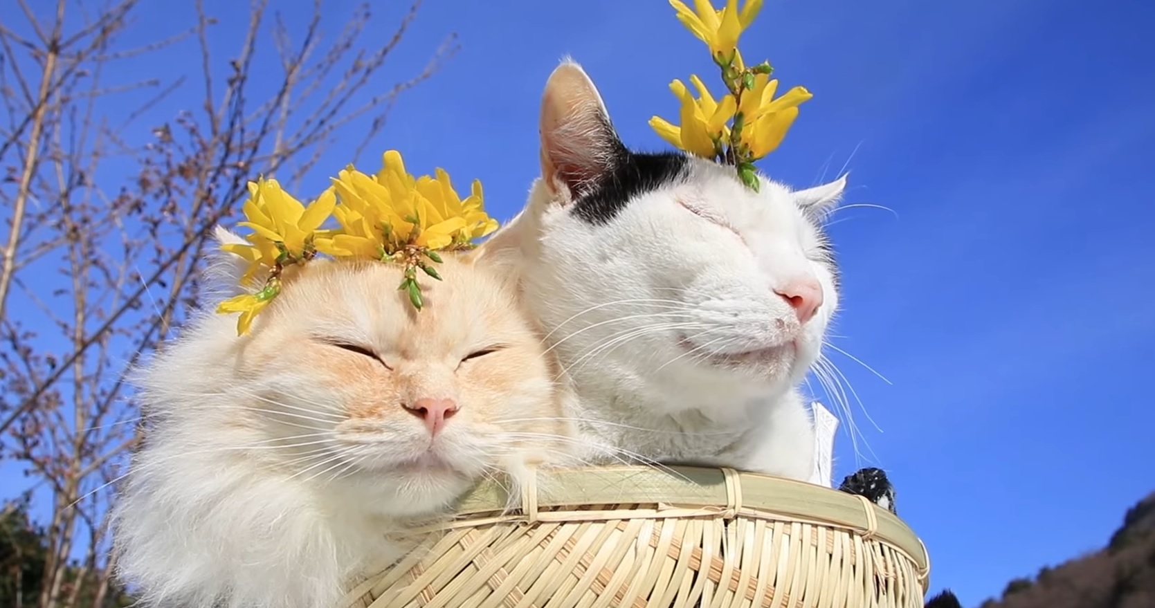 Adorable Cats Basking In The Sun