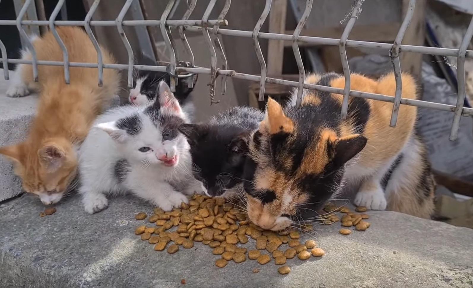 Cutest Stray Cat Family