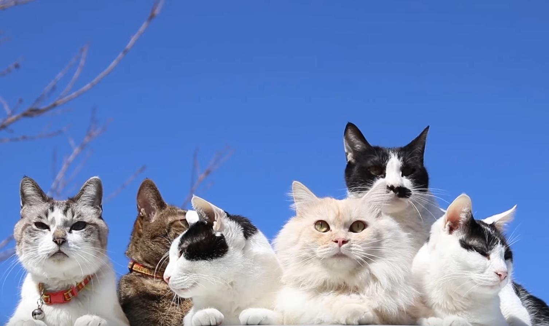 Cute Cats Relaxing Outside