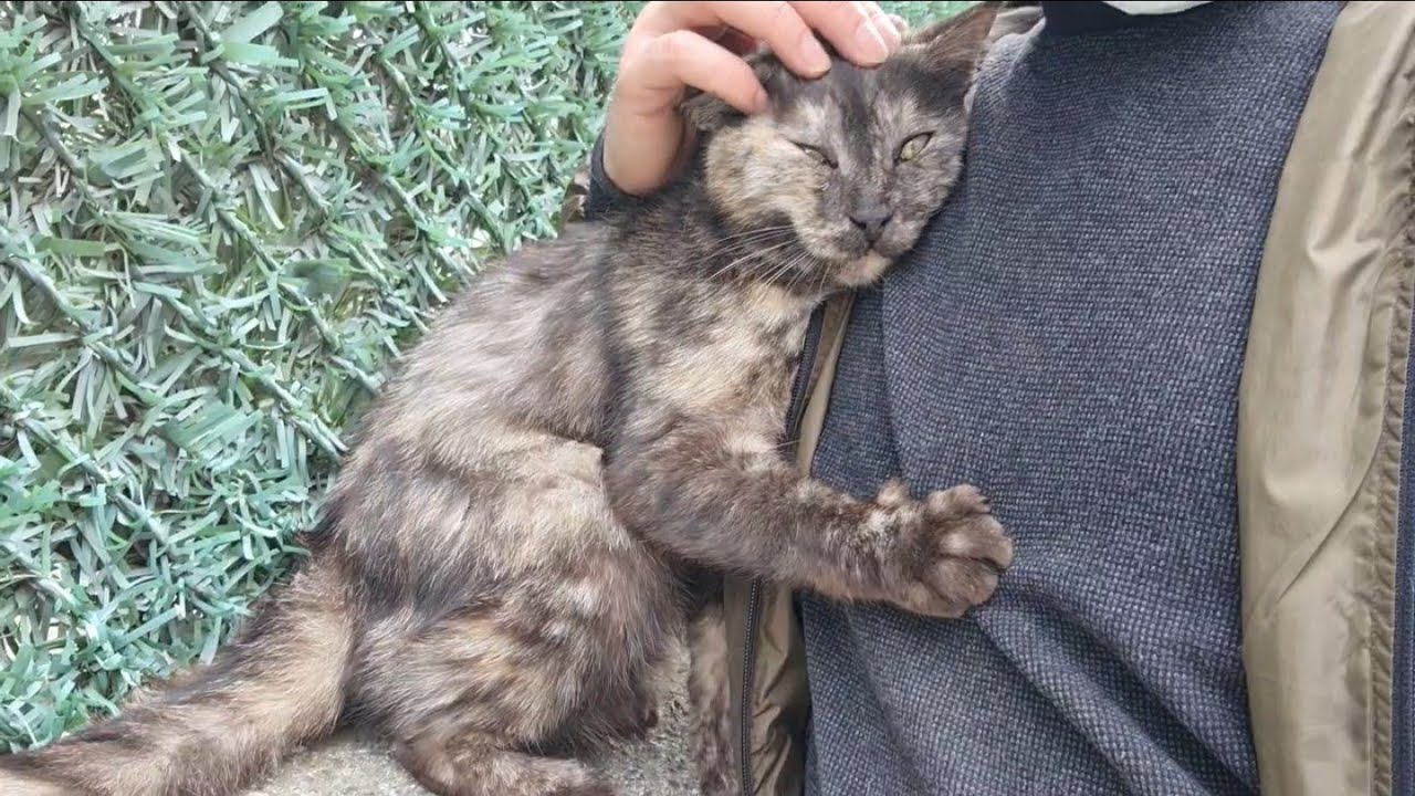Clingy Street Cat Video